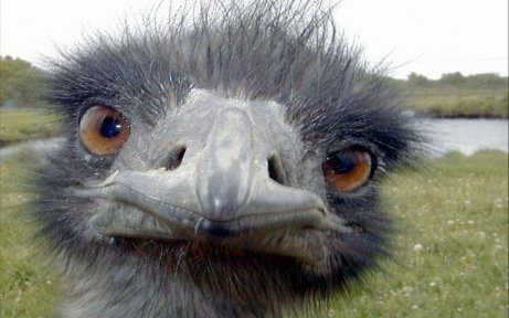 ostrich-face