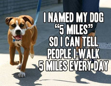 dog-5-miles